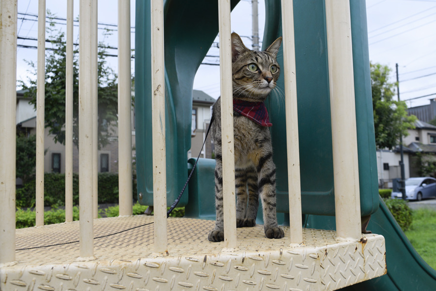 公園の滑り台に登るキジトラ猫の虎ノ介