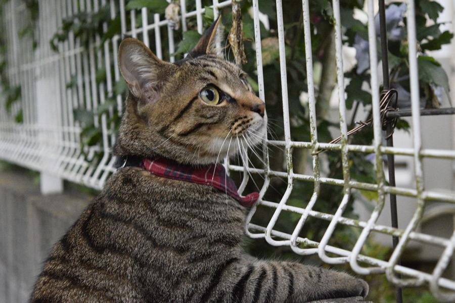 猫をみつけた虎ノ介