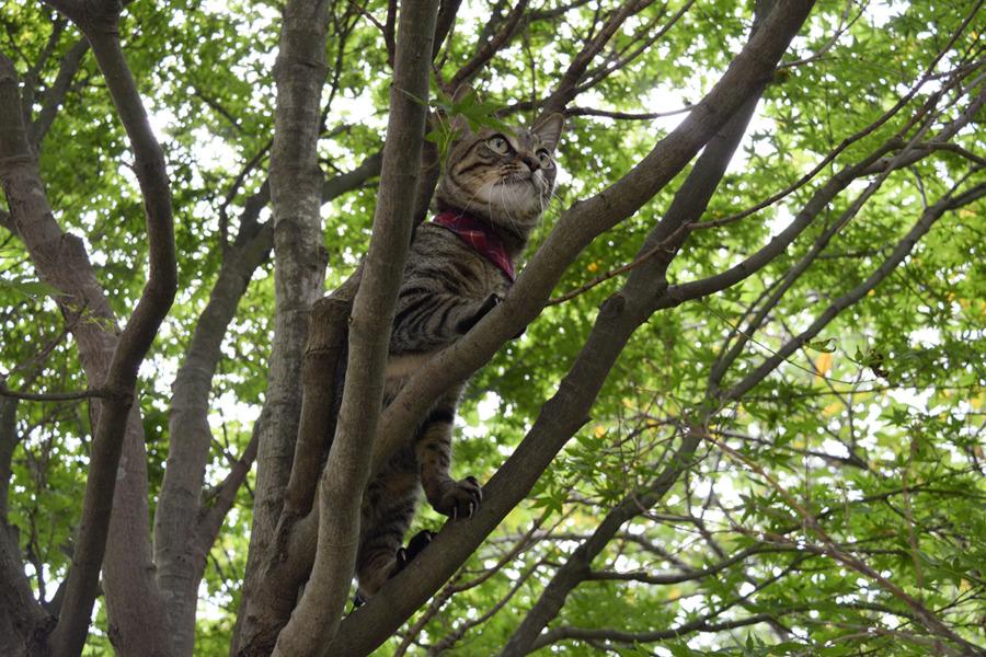 セミを追いかけるキジトラ猫の虎ノ介