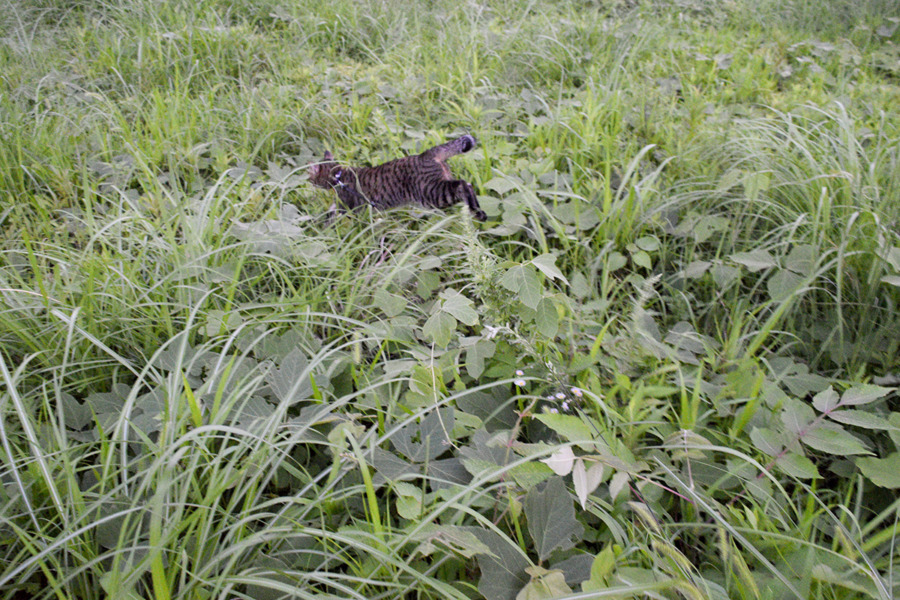 草むらで走り回る虎ノ介