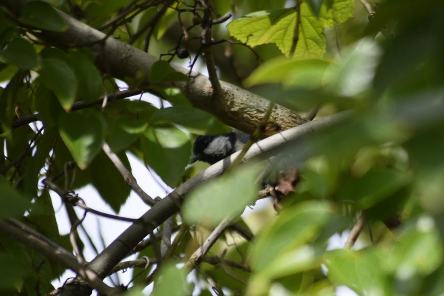 木の陰にいた鳥