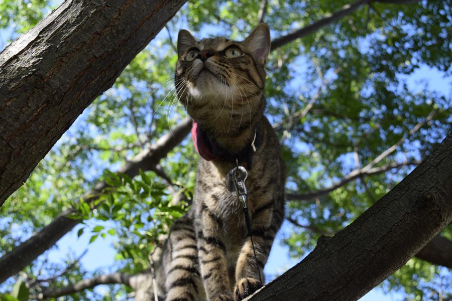 木の上から鳥を見上げる虎ノ介