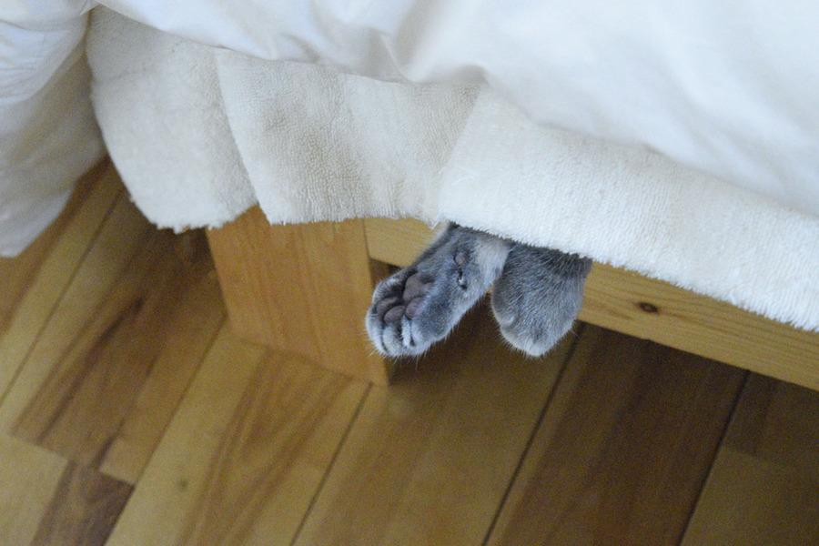 ベッドからでた春太の手