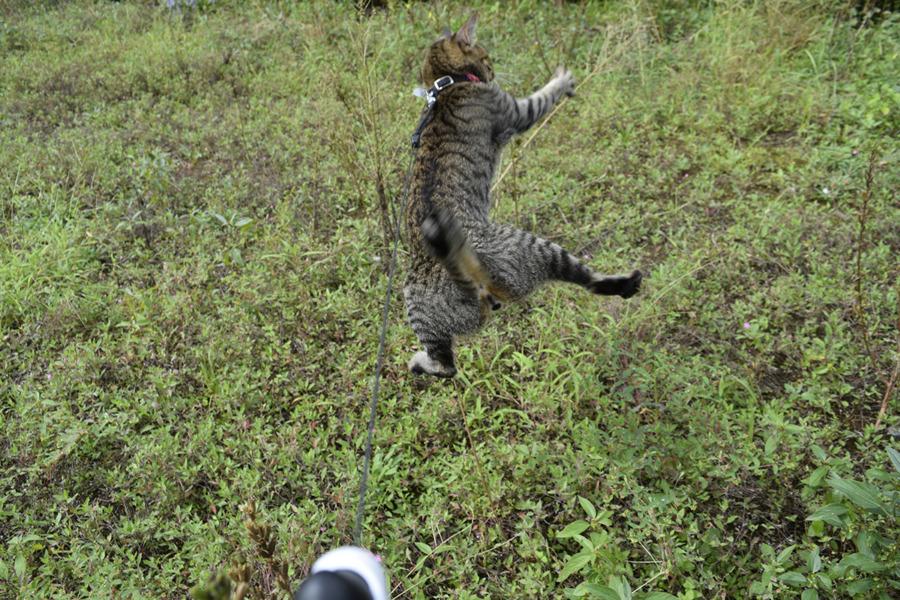 空き地ですごい恰好で飛び跳ねて狩りをする虎ノ介
