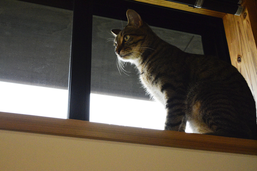 窓が開いていてご機嫌の虎ノ介