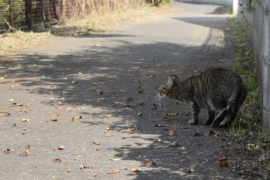 位置を移動したキジトラ猫の虎ノ介