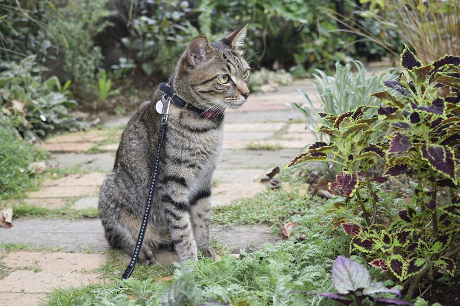 サバトラ猫の春太を見つめるキジトラ猫の虎ノ介