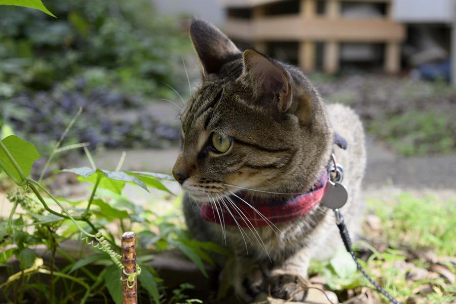 鳥を観察するキジトラ猫の虎ノ介