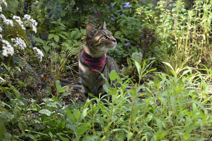 蜂をおいかけるキジトラ猫の虎ノ介