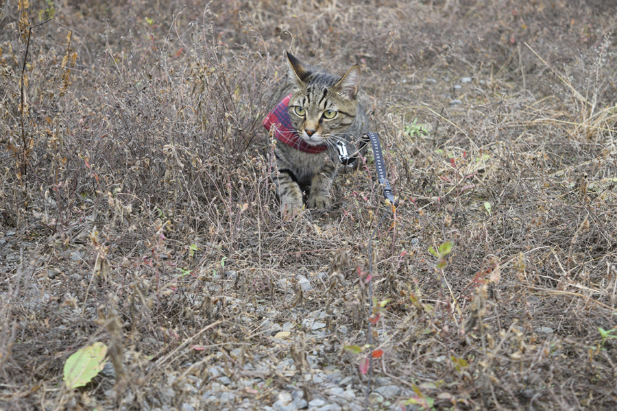 狩りを楽しむ虎ノ介