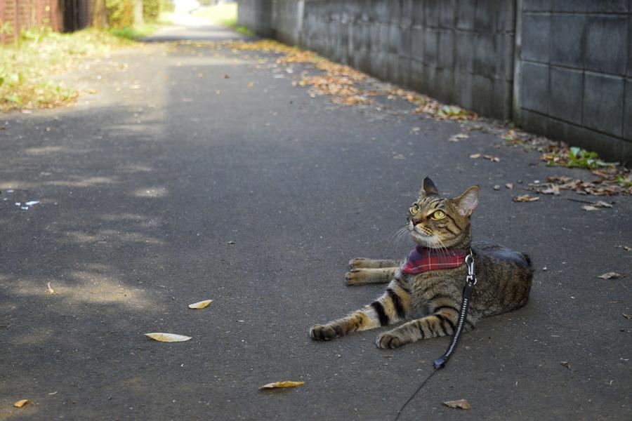 落ち葉が目立つようになった遊歩道と虎ノ介