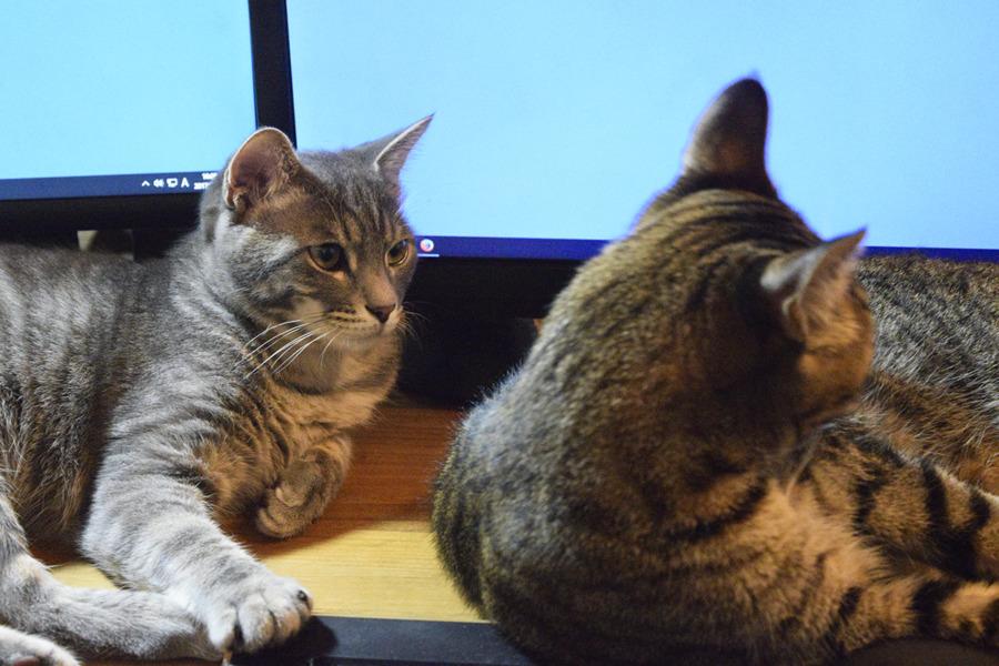 虎ノ介の隣に座るサバトラ猫の春太