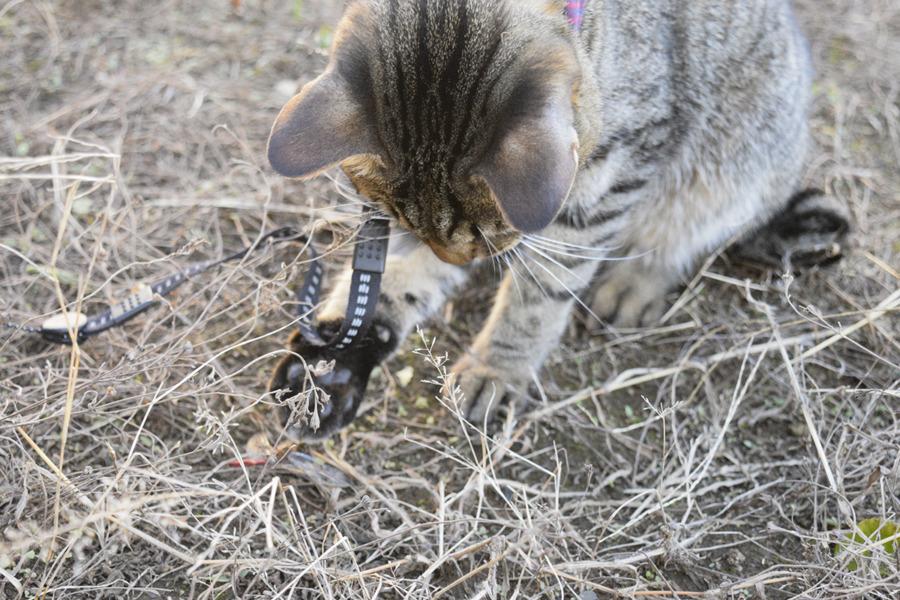 トンボを捕まえた虎ノ介