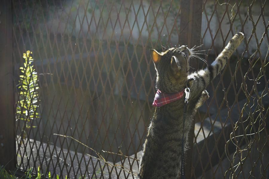 向こう岸の鳥さんに手を伸ばすキジトラ猫の虎ノ介