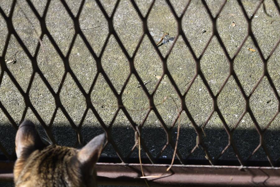 フェンスの向こうにいるトンボ