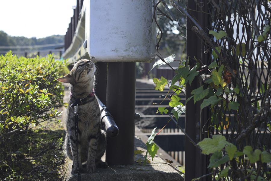 匂いを嗅ぐキジトラ猫の虎ノ介