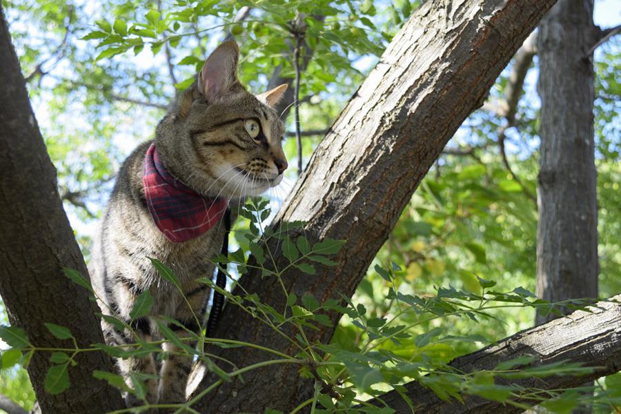 木の上から知らない人を見る虎ノ介