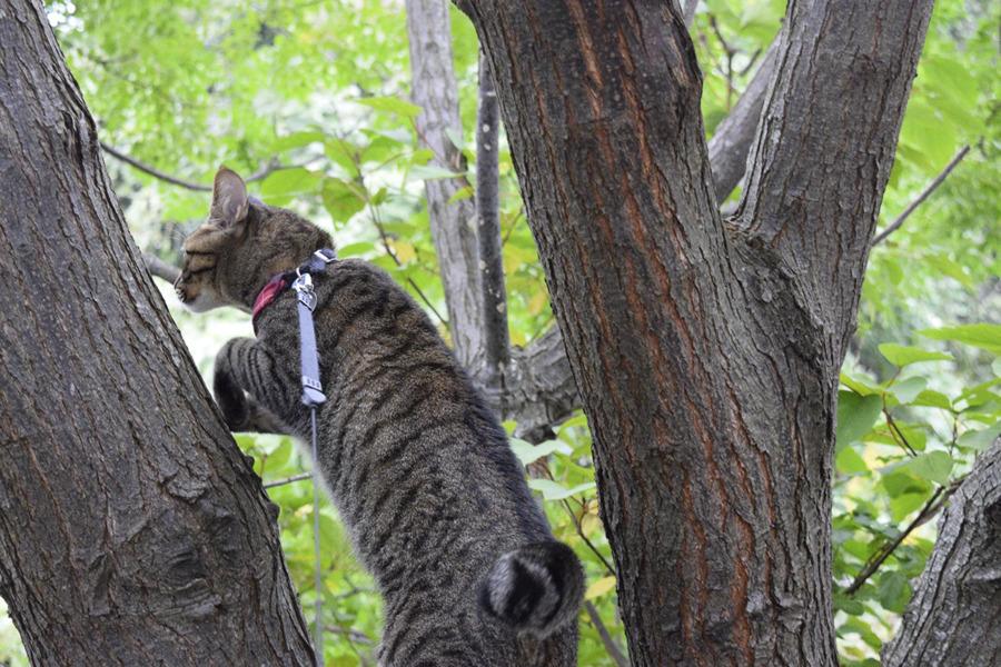 鳥を発見したキジトラ猫の虎ノ介
