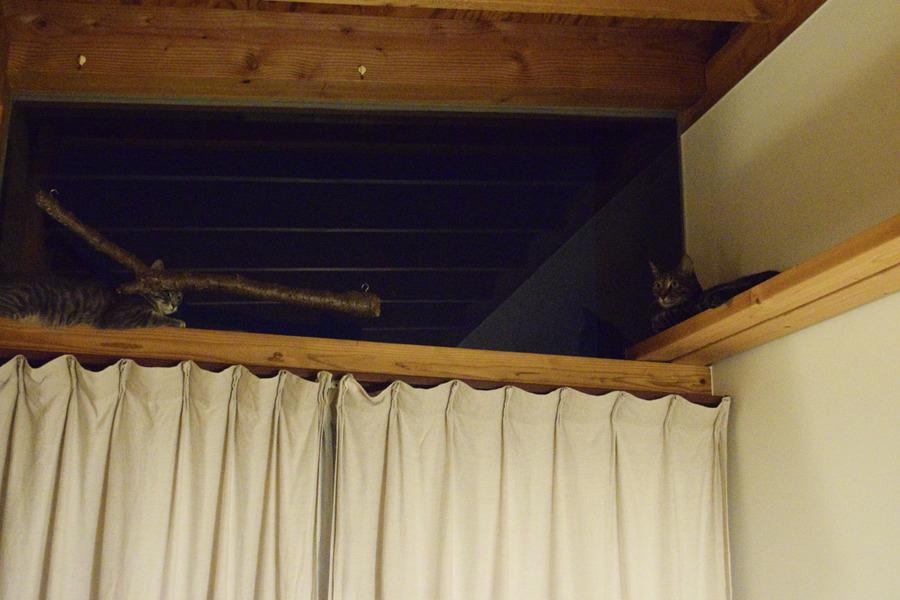 高い窓の上に登るキジトラ猫の虎ノ介とサバトラ猫の春太