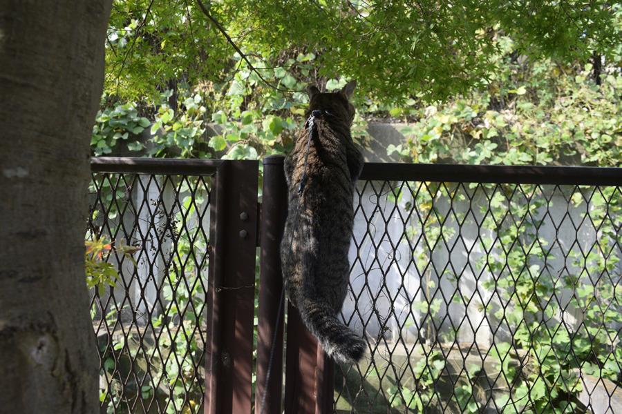 フェンスに登って鳥を追いかける虎ノ介