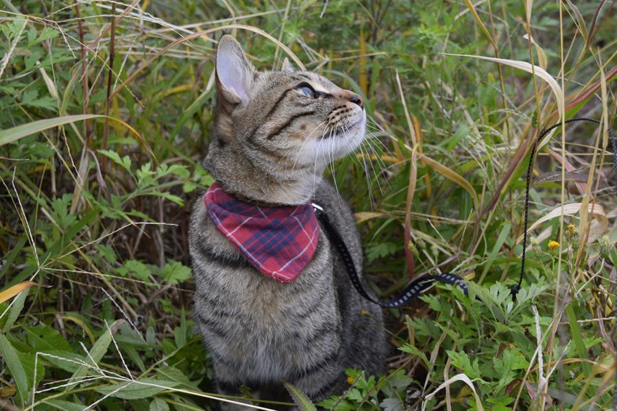 野良猫さんを探しているうちに鳥に気を取られるキジトラ猫の虎ノ介