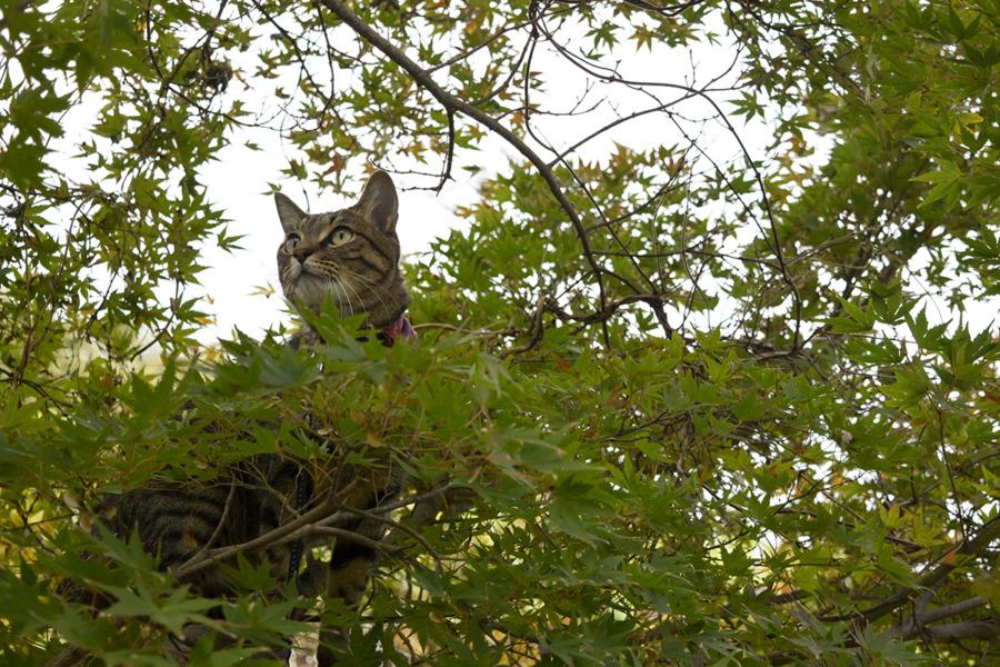 木の上で鳥を見上げる虎ノ介