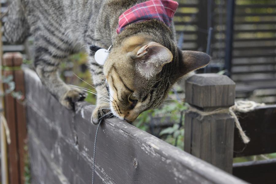 雀をさがすキジトラ猫の虎ノ介