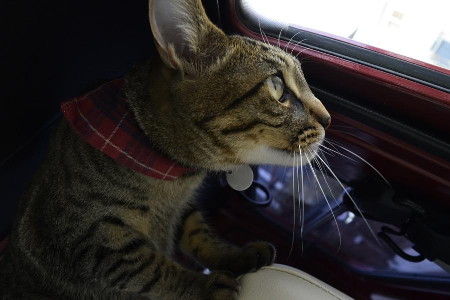 車の中で鳥を待つ虎ノ介