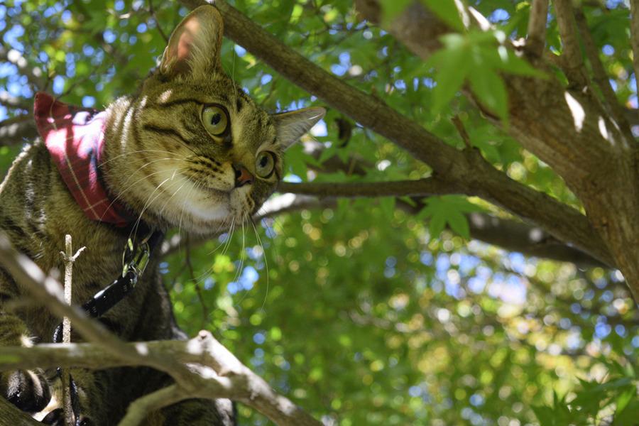よそのお庭の鳥を見つめる虎ノ介