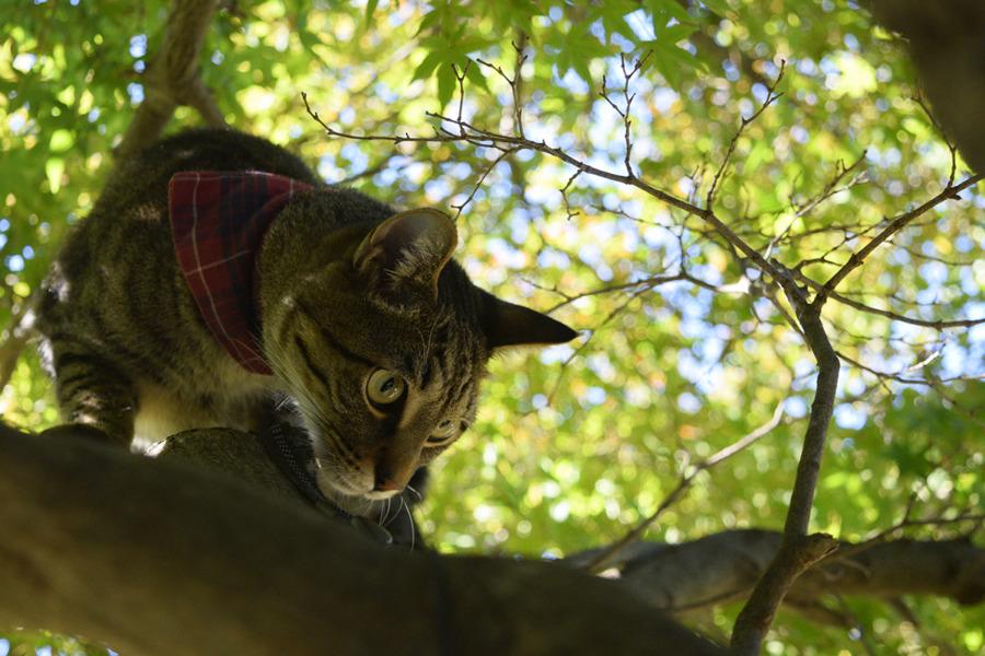 木の匂いを嗅ぐキジトラ猫の虎ノ介
