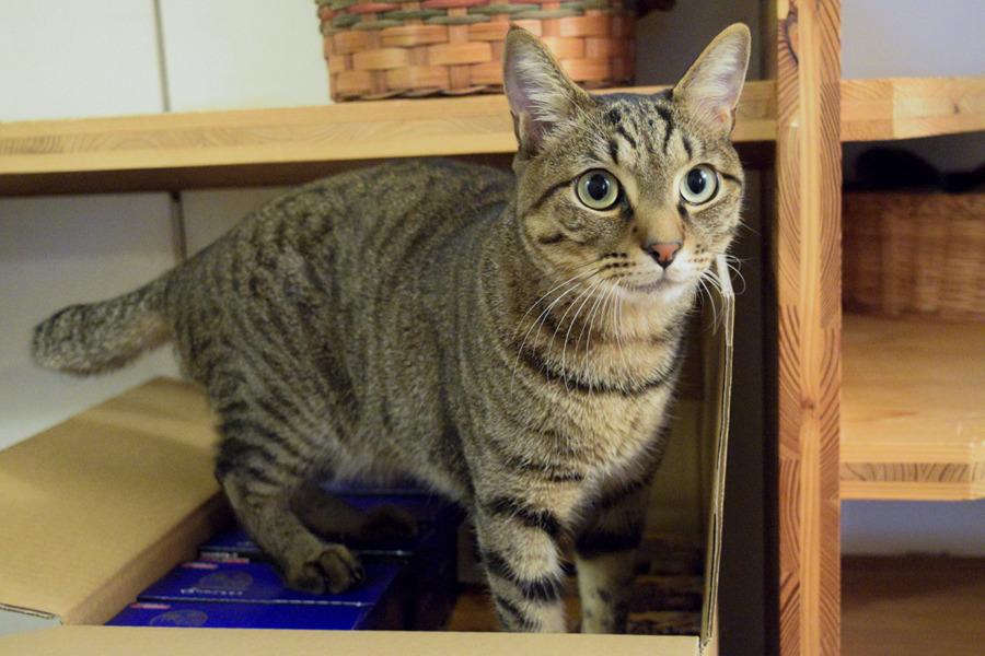 猫餌の上で目が丸くなる虎ノ介