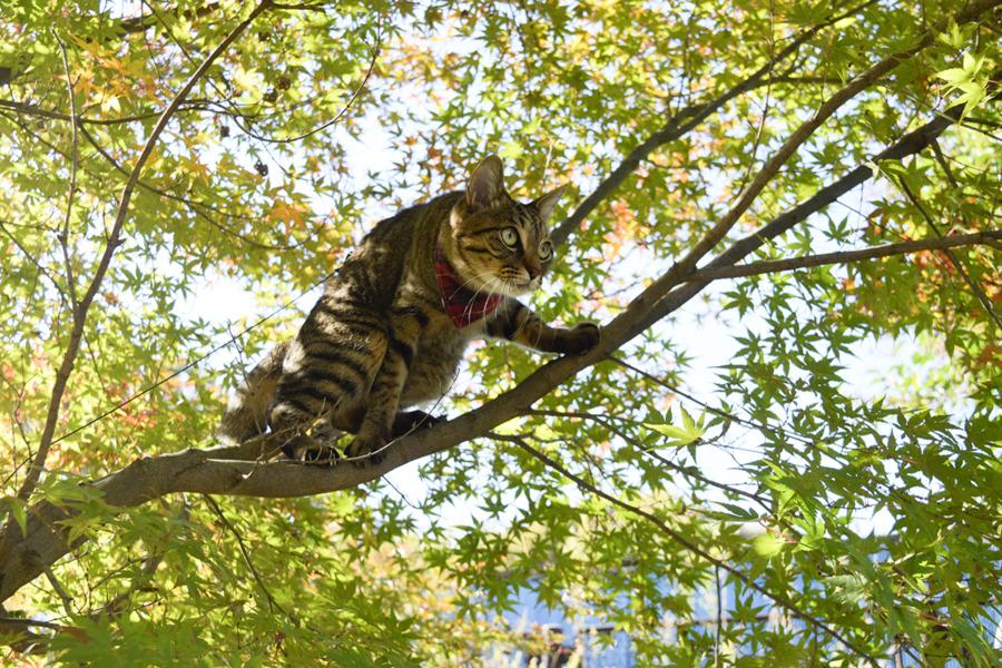 木登りして鳥をさがす虎ノ介