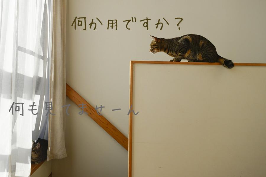 キジトラ猫の虎ノ介を見ていないふりをするサバトラ猫の春太