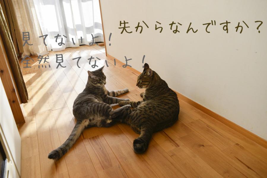 にらみ合うキジトラ猫の虎ノ介とサバトラ猫の春太