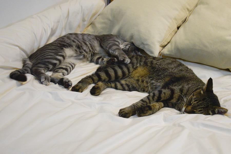 ベッドで眠る虎ノ介と春太