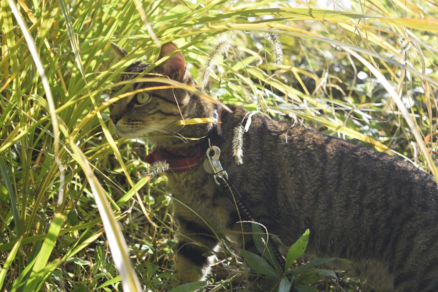 草むらに潜んで鳥を探す虎ノ介