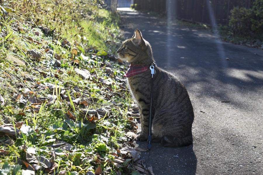 草むらで鳥を探す虎ノ介
