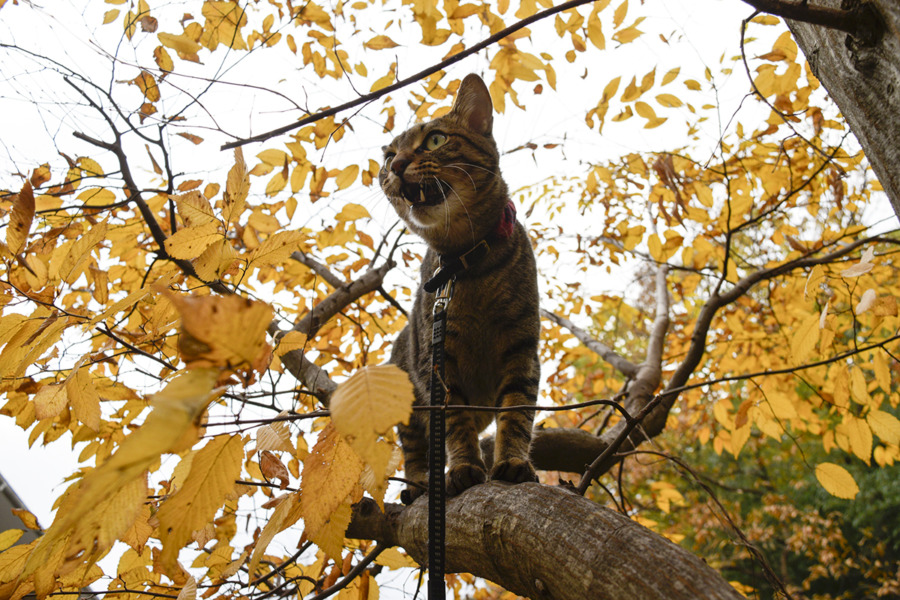 木の上から鳥に文句を言う虎ノ介