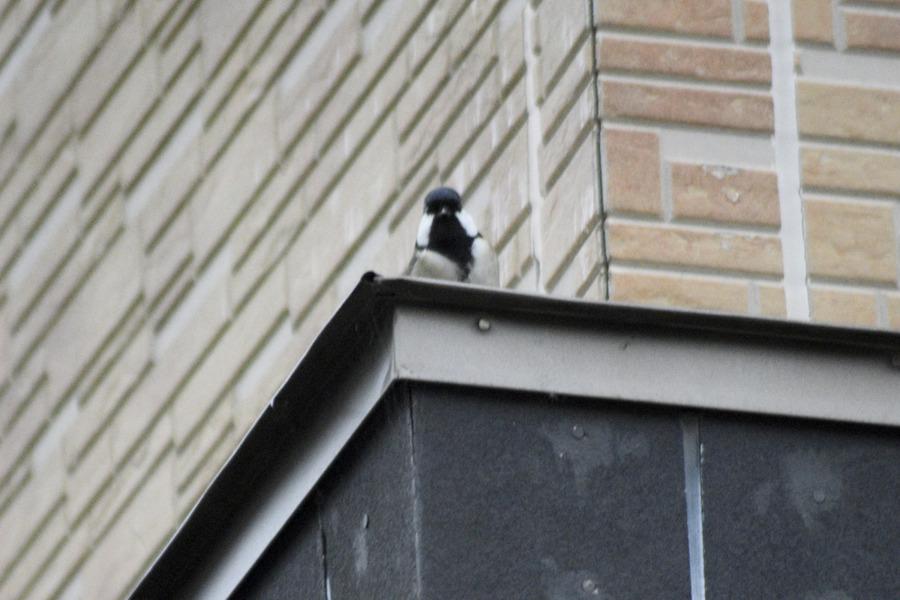 屋根の上から見下ろす鳥