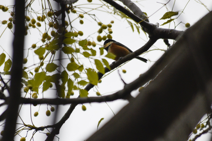 木の上の鳥