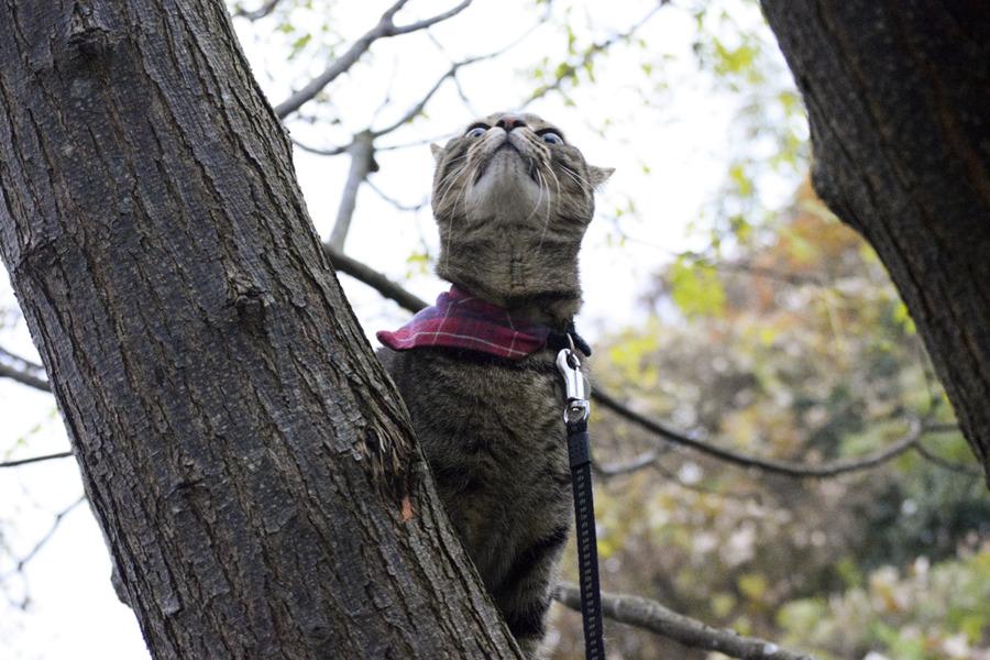 逃げる鳥を見上げるキジトラ猫の虎ノ介