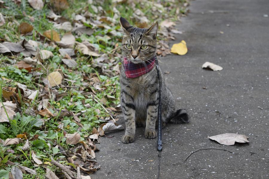 寒そうなキジトラ猫の虎ノ介