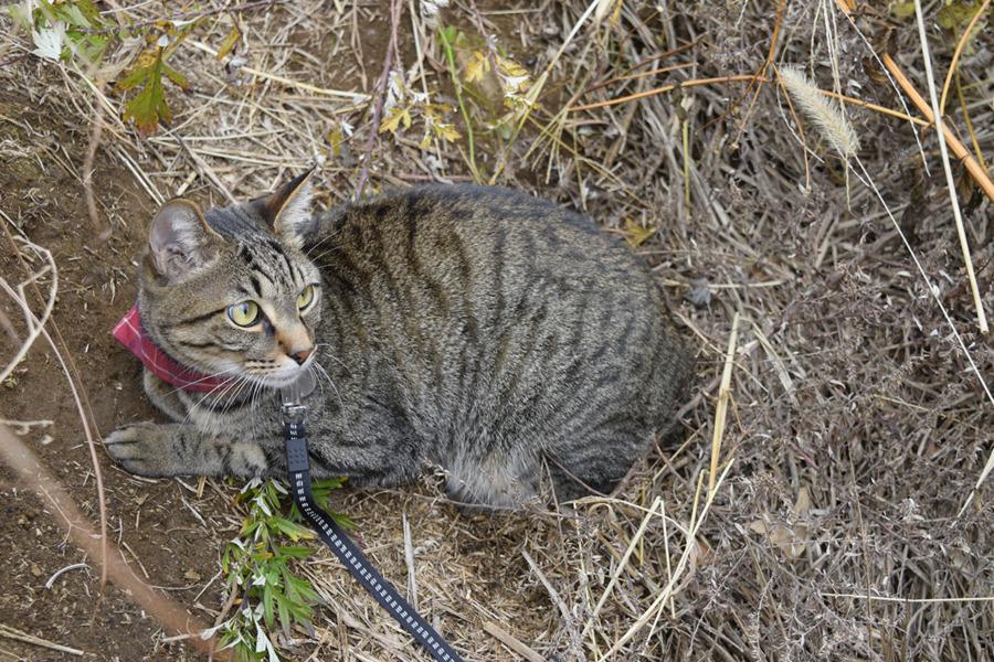 穴に隠れて鳥を待つキジトラ猫の虎ノ介