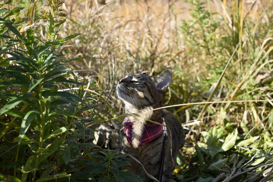 お日様を満喫するキジトラ猫の虎ノ介