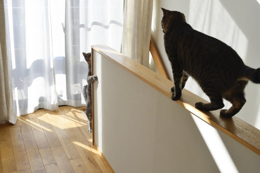 じゃれあうキジトラ猫の虎ノ介とサバトラ猫の春太