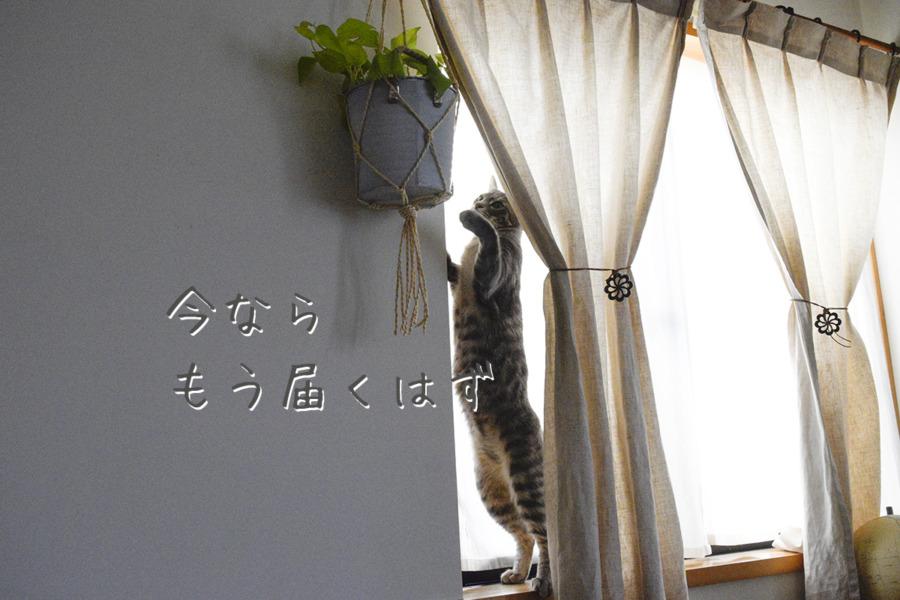 観葉植物にいたずらするサバトラ猫の春太