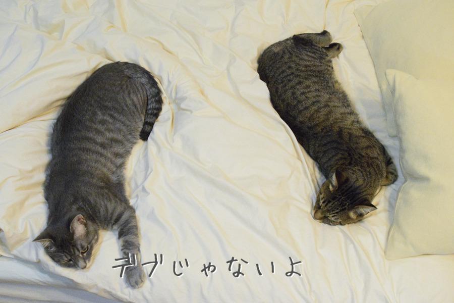 虎ノ介の横に並んで眠るサバトラ猫の春太