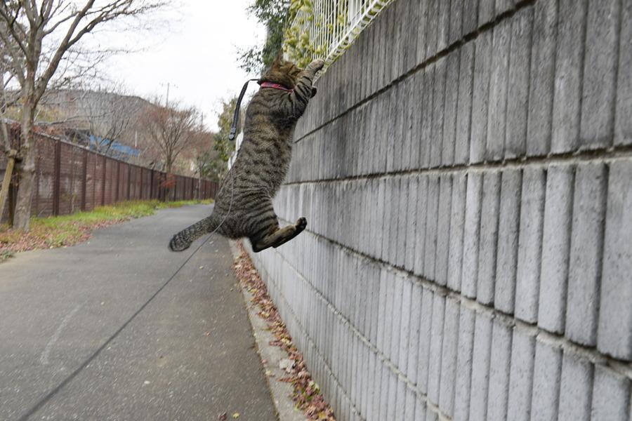 フェンスに飛びつく虎ノ介