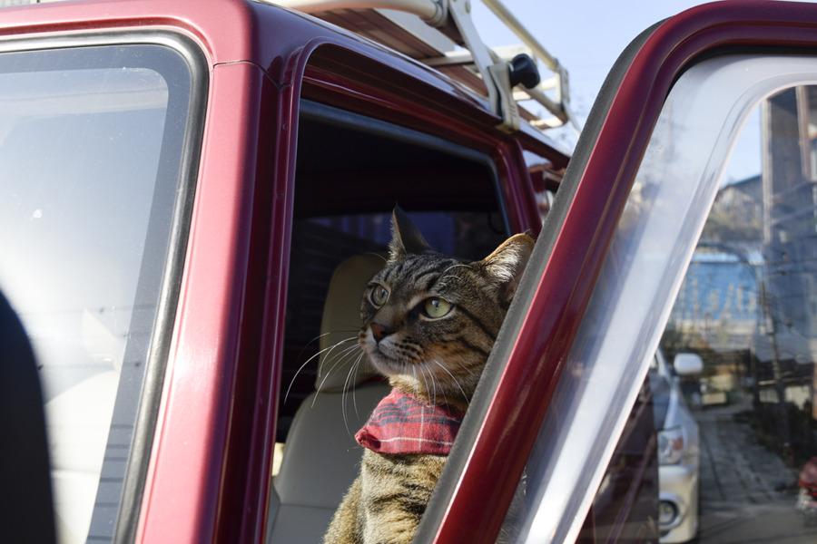 車に乗り込む虎ノ介