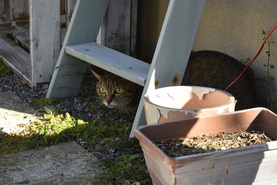 棚の下に隠れる虎之助くん